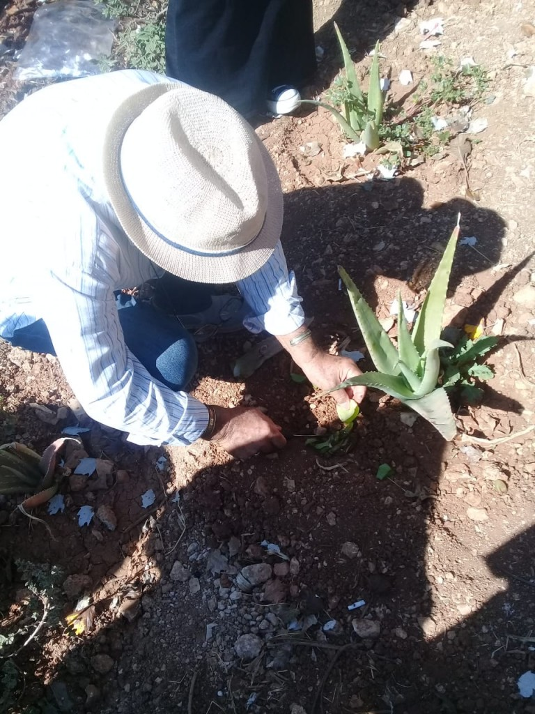 Aloe Vera1